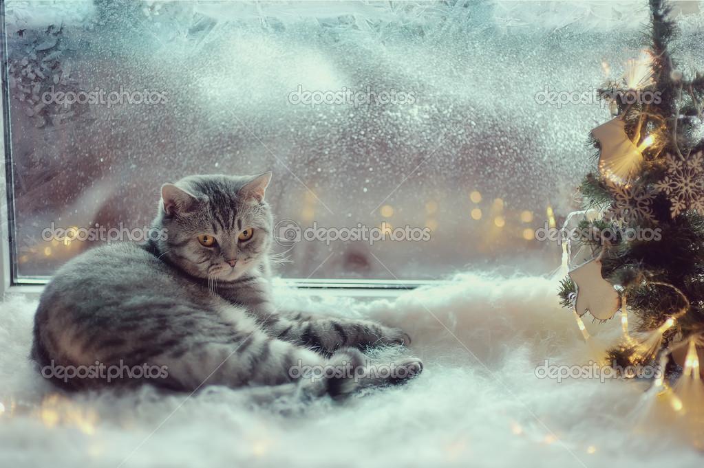 Зимний кот на окне