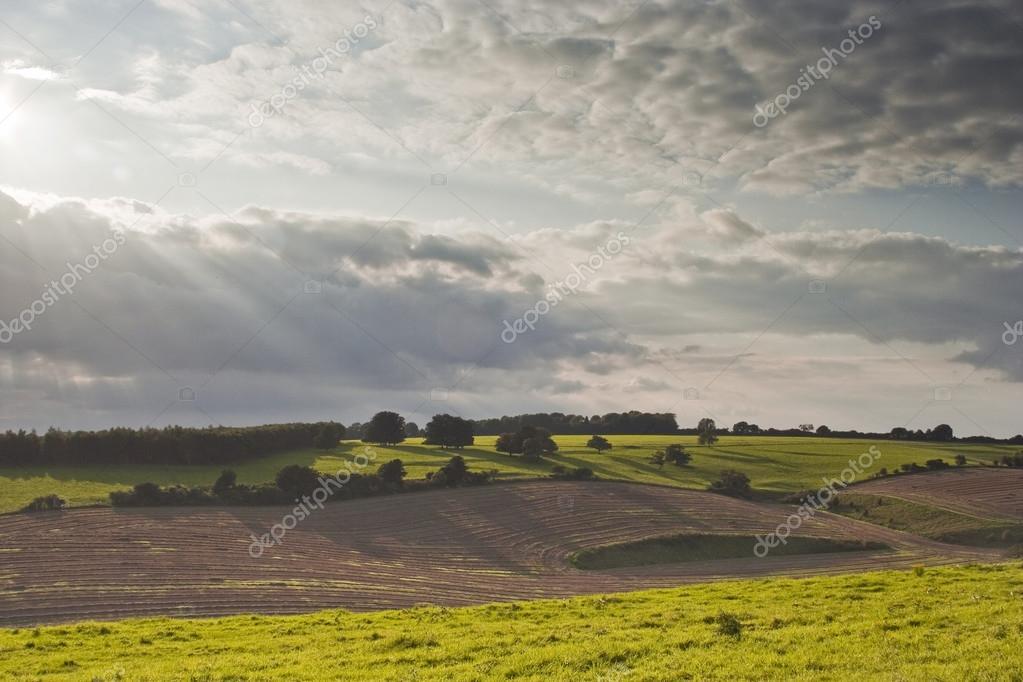 Summer Fields in countryside