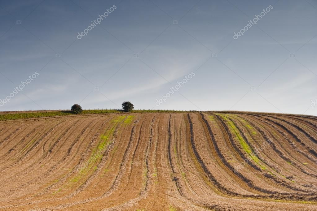 Ploughed fields in countryside