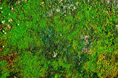 The moss texture