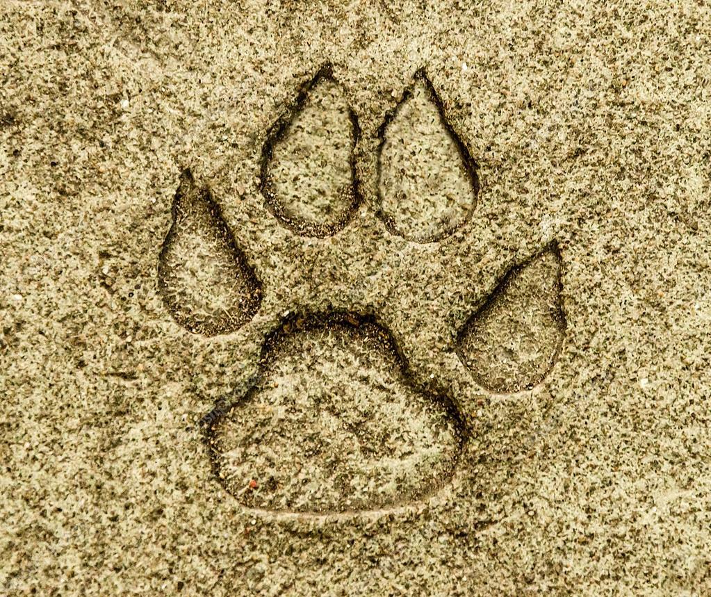 Huella animal en piso tierra fotos de stock for Como nivelar un piso de tierra