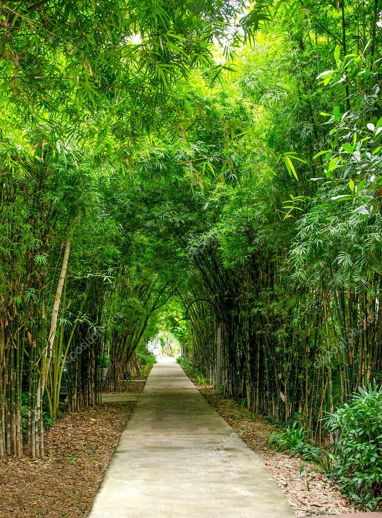 Bamboo tree tunnel background