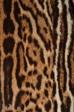 Ocelot fur closeup