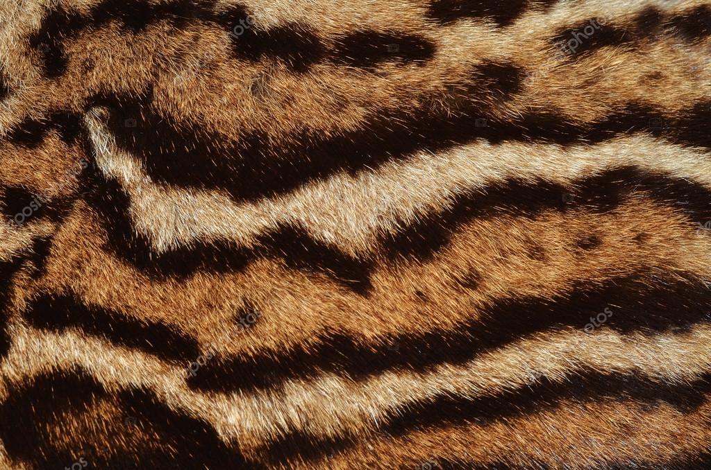 Ocelot fur stripes