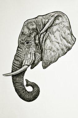 Elephant head side view