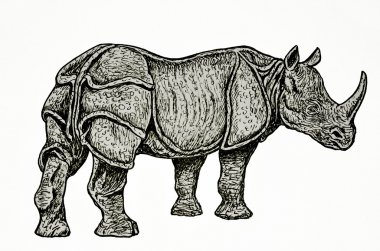 Indian rhino drawing