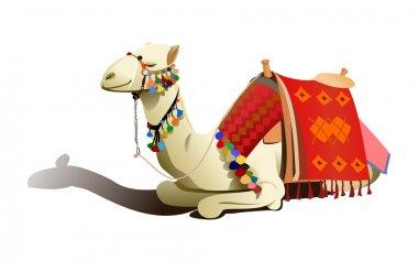 Saddled camel resting