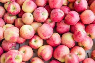 Fresh Honey Crisp apples on display