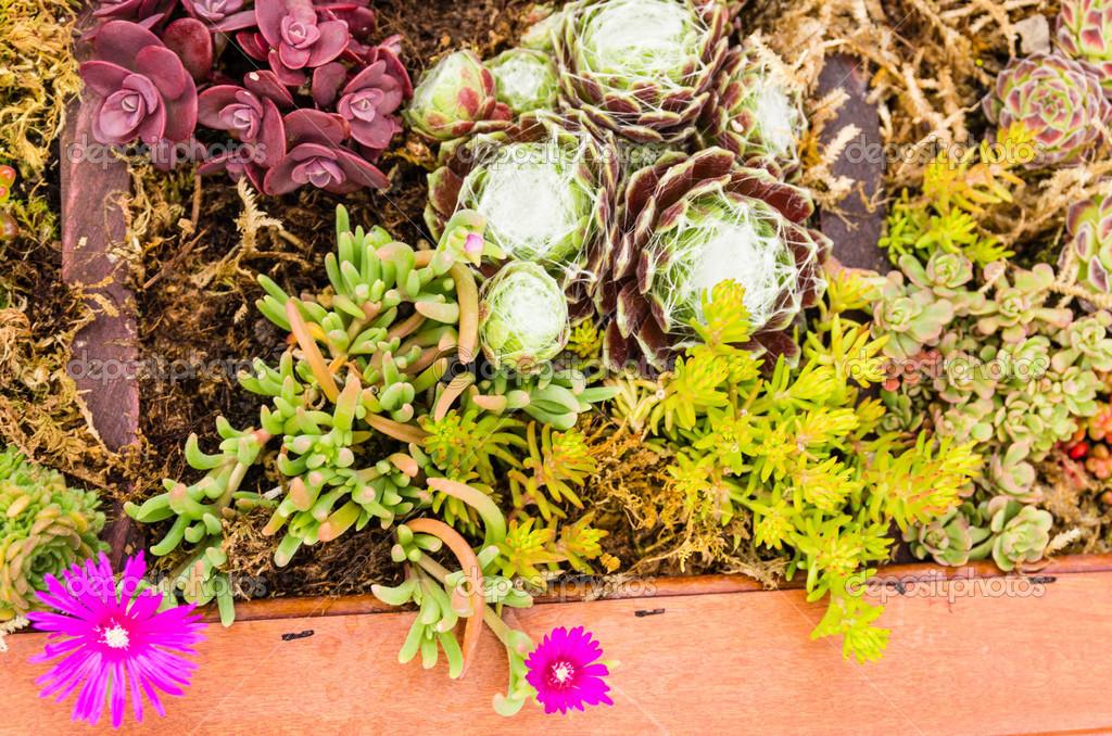Sedum Pflanzen Fur Die Dachbegrunung Anwendungen Verwendet