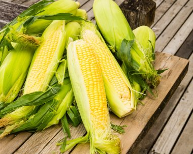 Ears of fresh yellow sweet corn