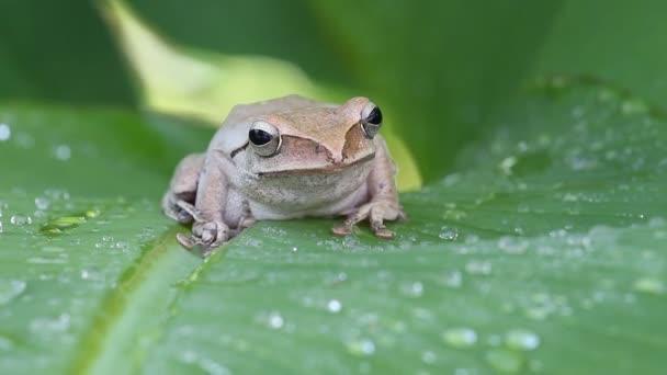 Frosch in der Natur verlassen