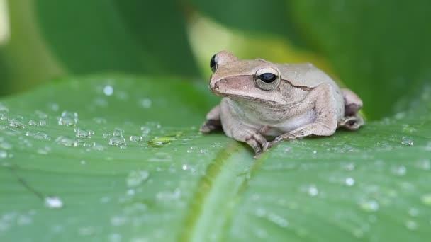žába na zelených listech