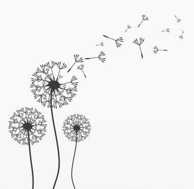 Three vector dandelions