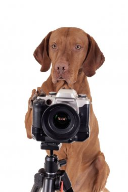 Well trained dog behind the camera on tripod isolated on white background stock vector