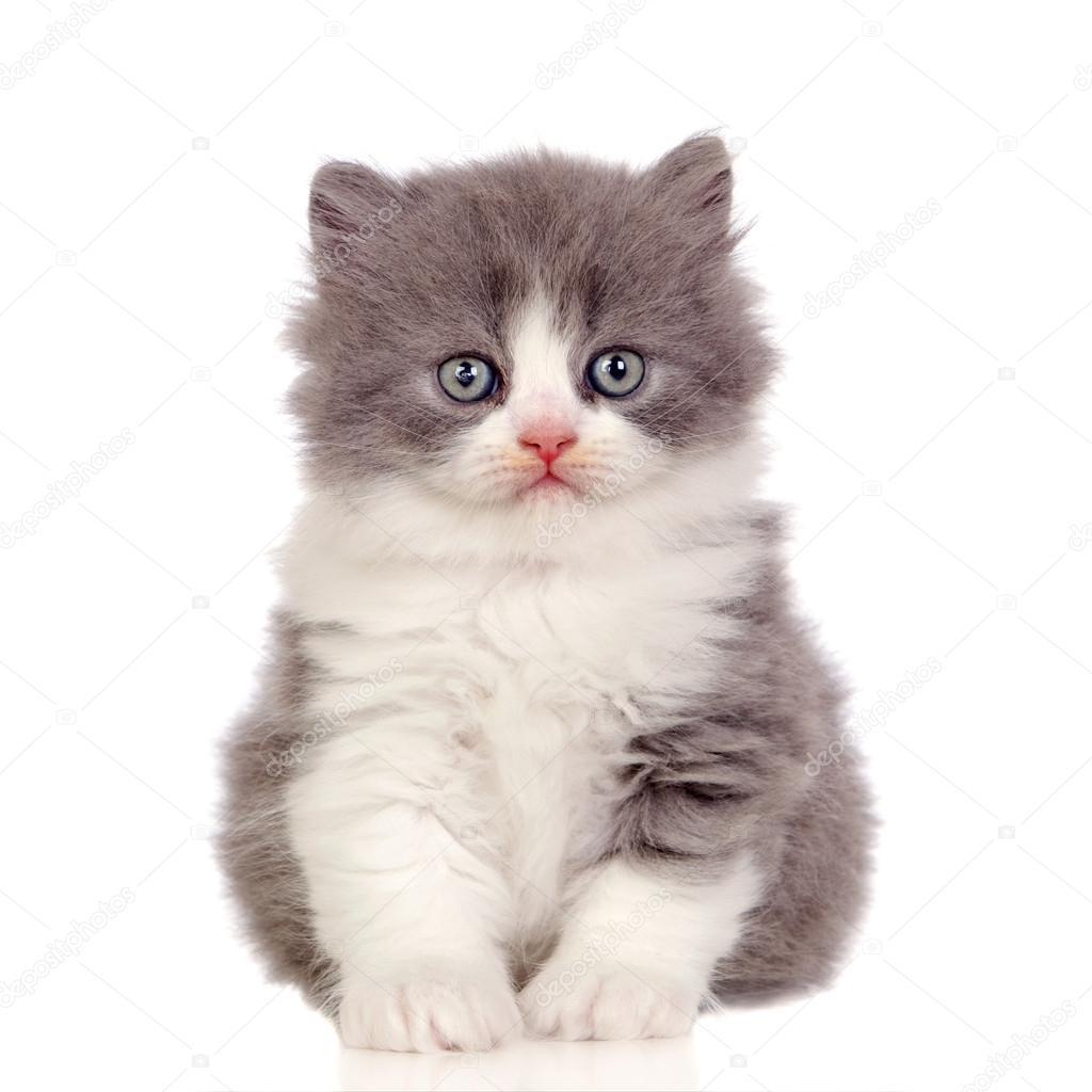 Schöne Zeichnungen schöne angora kätzchen mit grau und weiches haar stockfoto gelpi