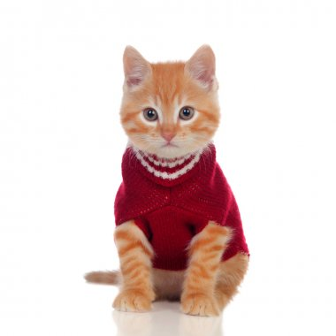 Beautiful red-haired kitten wearing a wool sweater