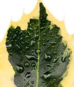 zelený list closeup rostlin