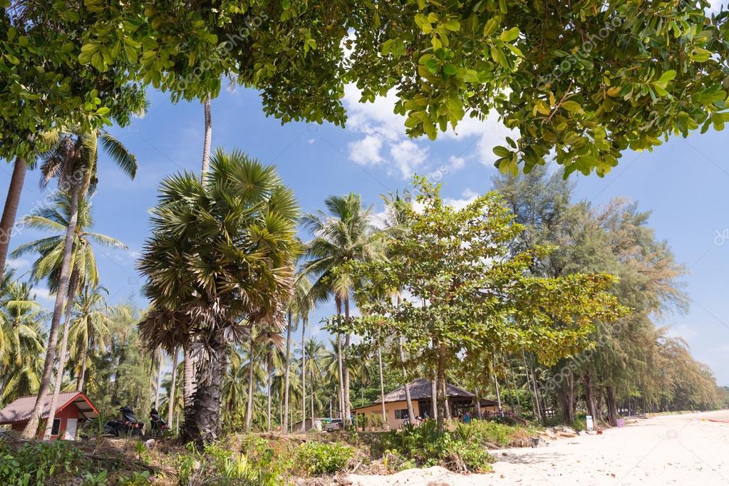Tropical Beach in Krabi