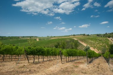 Vineyard in Chianti, Tuscany stock vector