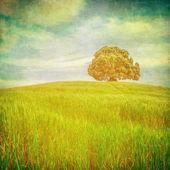 Photo Tree over grunge background