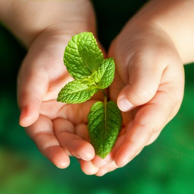 Infant hands holding green plant.