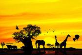 Fotografie konceptuální afrického safari pozadí.