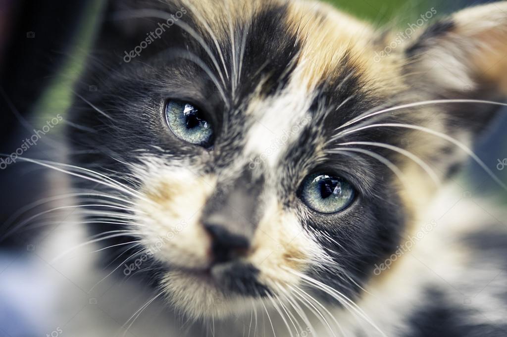 Cub cat portrait