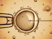 Fotografia inseminazione artificiale