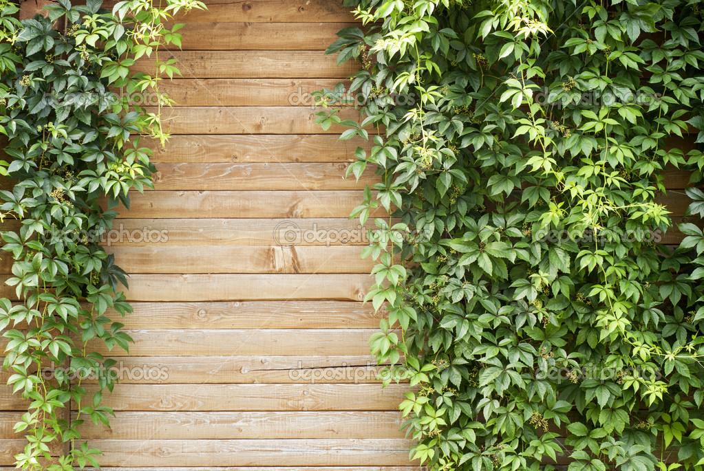 plante verte plante grimpante photographie mankukuku 12384945. Black Bedroom Furniture Sets. Home Design Ideas