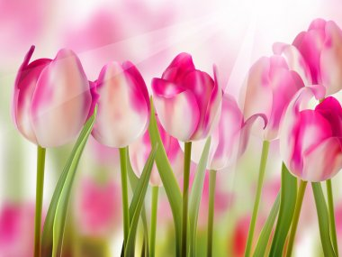 Pink tulip with bokeh. EPS 10