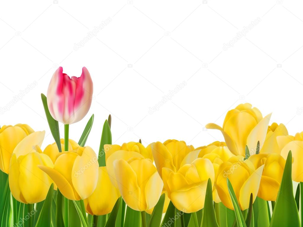 Yellow tulips and one red. EPS 8