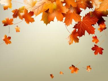 Colorful autumn leaves falling. EPS 10