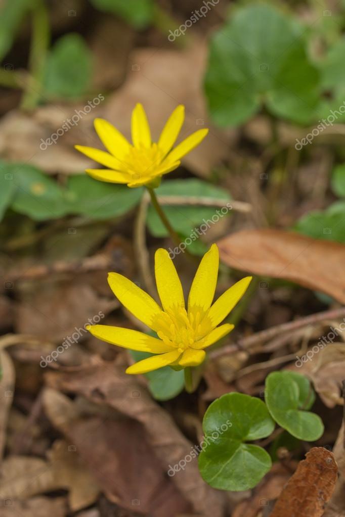 INDIGO DIY желтый один цветок анемона Орхидея Тюльпан 91