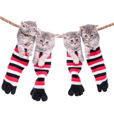 kittens hanging washing line