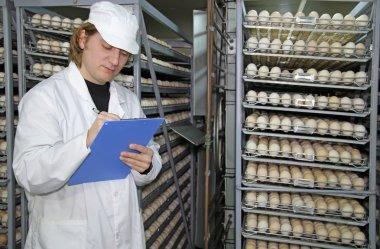 Farmer controls chicken eggs in incubator stock vector