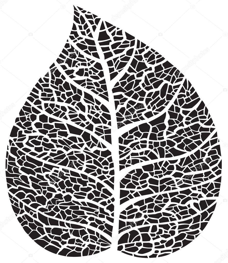 Black leaf skeleton silhouette