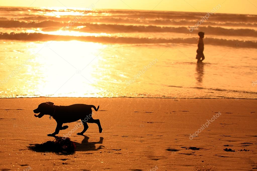 Silhouettes of running dog and a man on the beach during sunset
