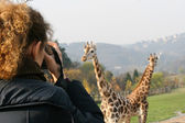 Fotografia gruppo tiro donna delle giraffe