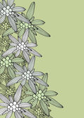 edelweiss background