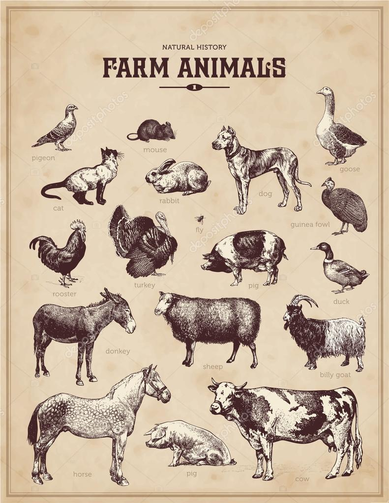 Set Of Vintage Farm Animals Stock Vector
