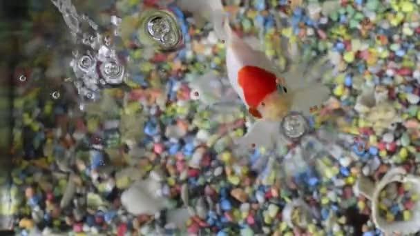 pojídání ryb v acuarium