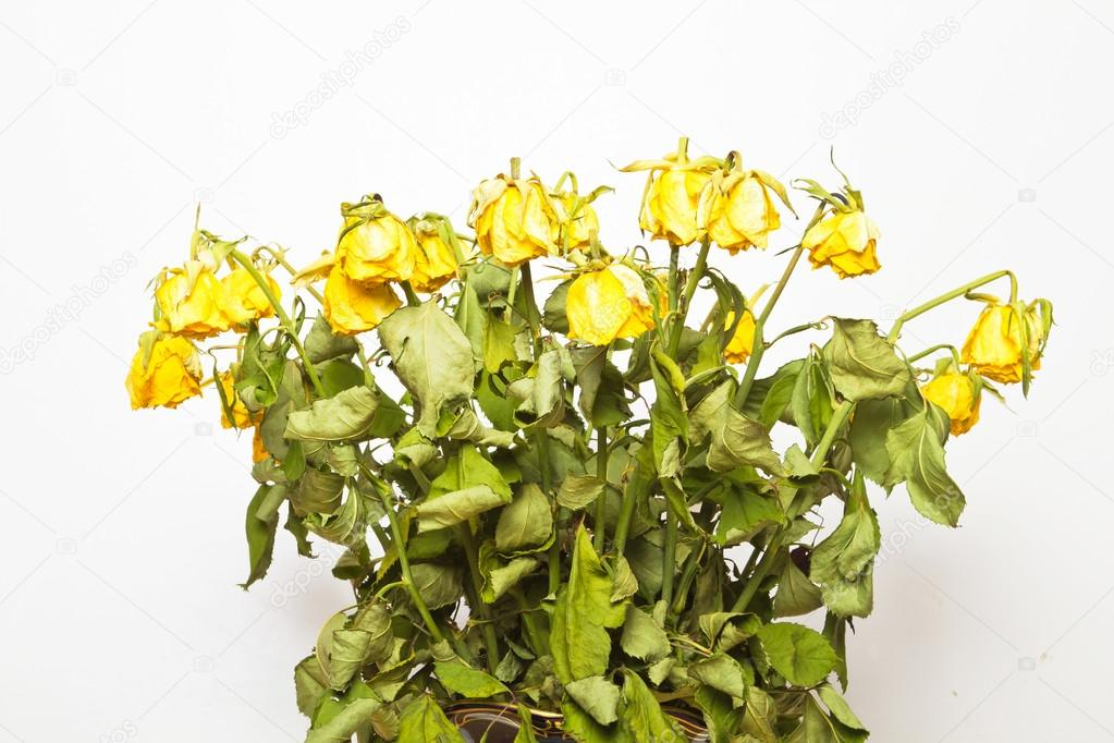 Фото увядшие цветы 125