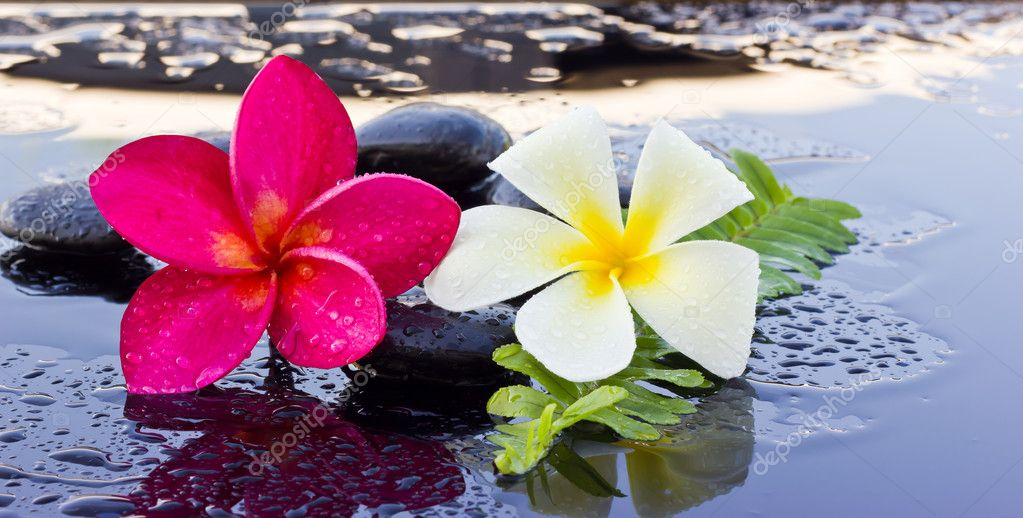 Spa stones and frangipani flower.