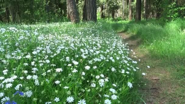 Lesní krajina cesta mezi poli květiny a jedle borovice