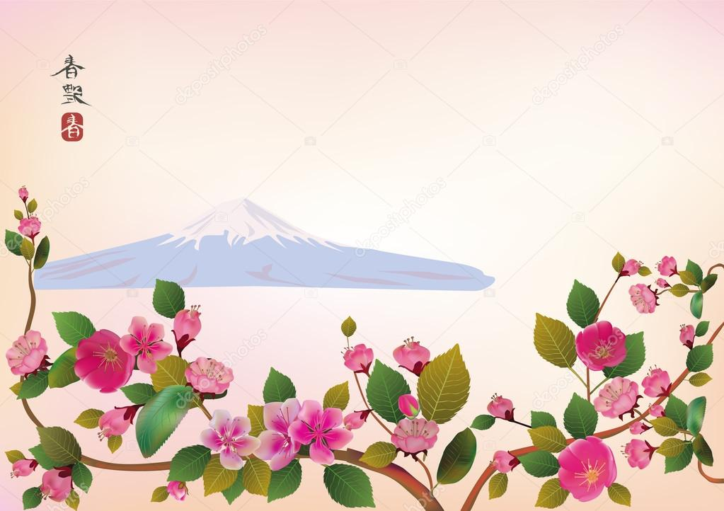 Fuji .Cherry blossoms, spring has come.