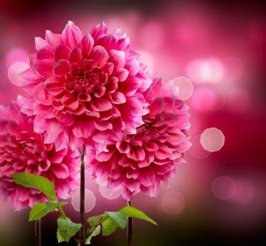 Dahlia Autumn Flowers