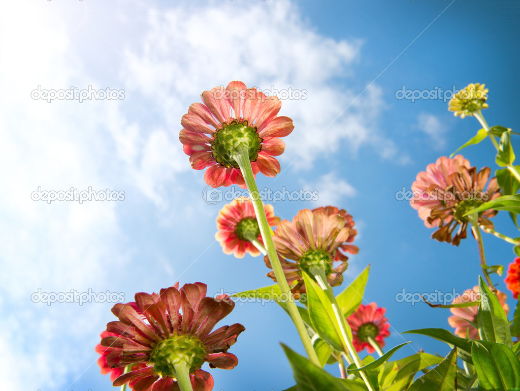Fiori nel cielo azzurro fiore zinnia fiori d 39 autunnali for Immagini fiori autunnali