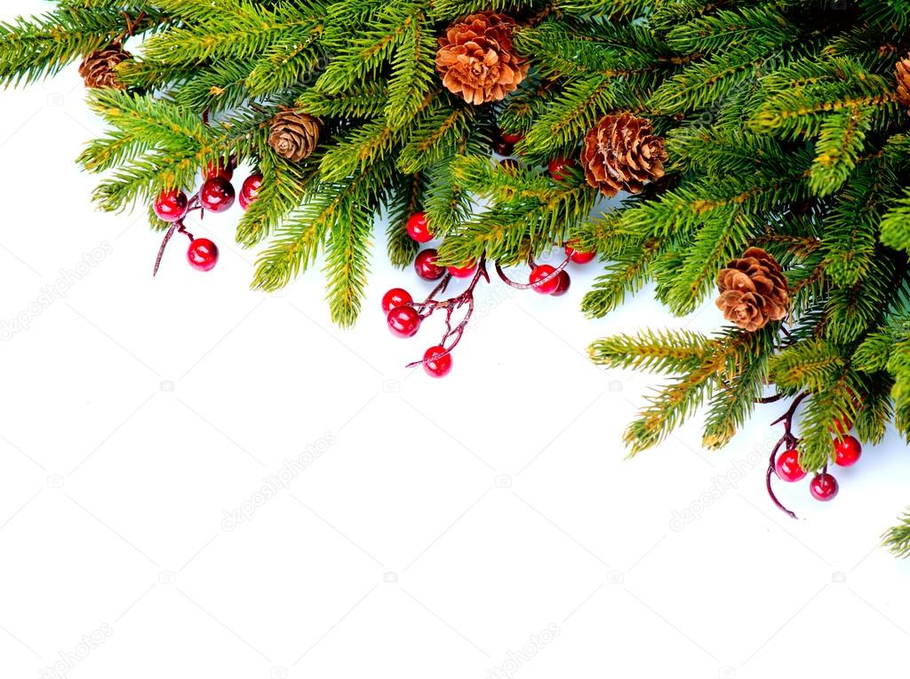 Christmas Evergreen Tree Border Design. Isolated on white ...