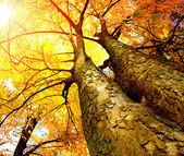 podzimní stromy. na podzim