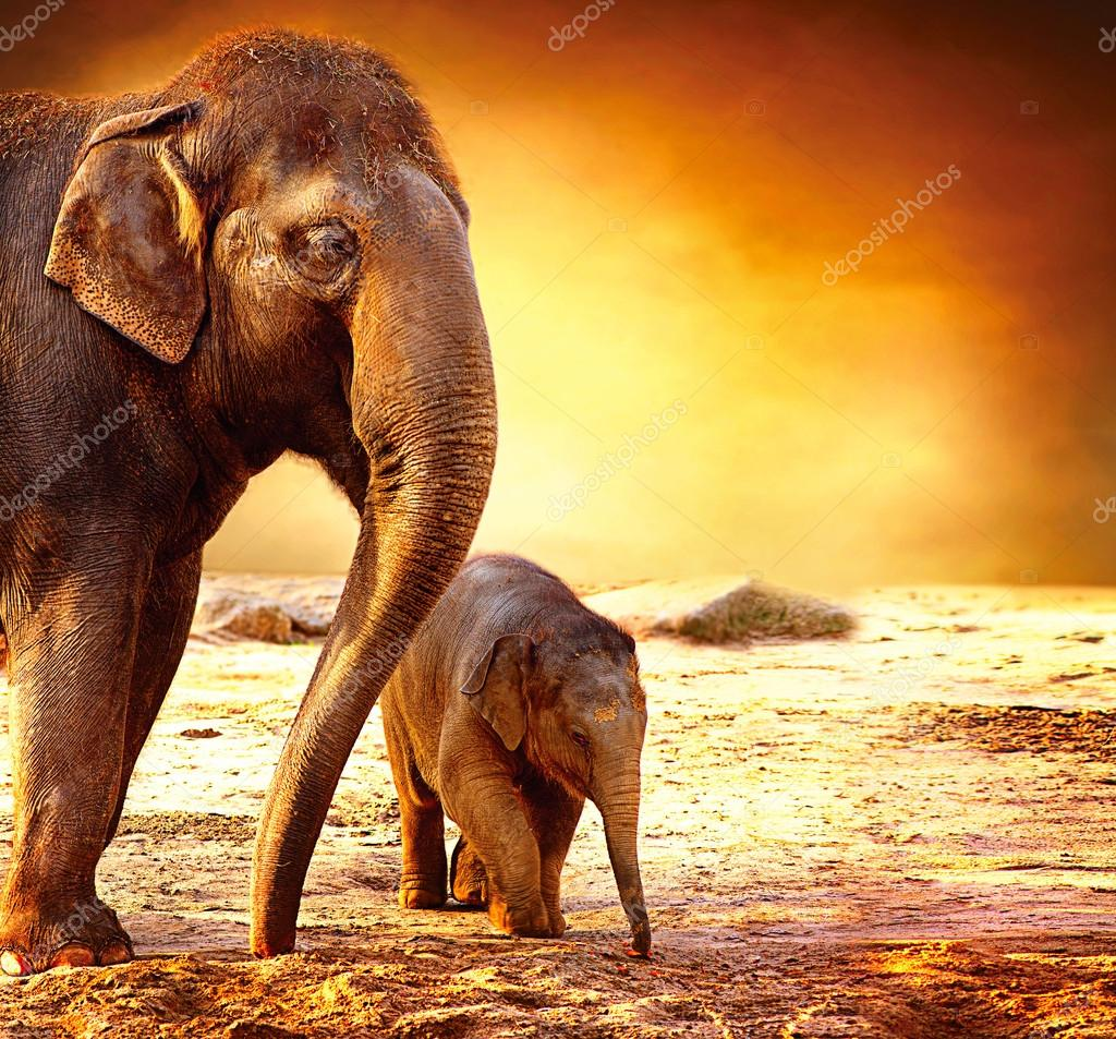 Elephant Mother and Baby outdoors